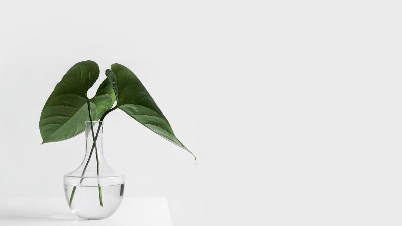 シンプルな葉っぱ